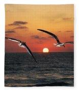 Black Skimmers At Sunset Fleece Blanket