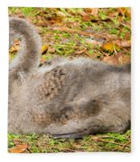 Black Swan Cygnet Fleece Blanket