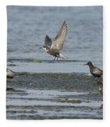 Black Terns Fleece Blanket