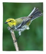 Black-throated Green Warbler, Female Fleece Blanket