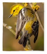 Black-throated Green Warbler Fleece Blanket