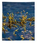 Bladder Seaweed, Fucus Vesiculosus Fleece Blanket