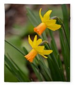 Blooming Daffodils Fleece Blanket