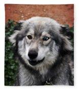 Blue And Brown Eyed Husky Fleece Blanket