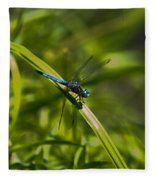 Blue Damsel Dragon Fly Fleece Blanket