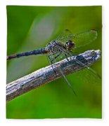 Blue Dragonfly 5 Fleece Blanket