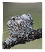 Blue-gray Gnatcatcher Nest Fleece Blanket
