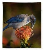 Blue Jay 1 Fleece Blanket