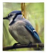 Blue Jay On A Misty Spring Day - Square Format Fleece Blanket
