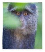 Blue Monkey Cercopithecus Mitis, Lake Fleece Blanket