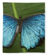 Blue Morpho - Morpho Peleides Fleece Blanket
