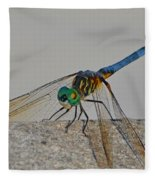 Blue Tail Dragonfly On Navarre Beach2 Fleece Blanket
