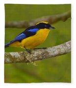 Blue-winged Mountain Tanager Fleece Blanket
