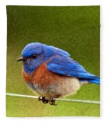 Bluebird  Painting Fleece Blanket