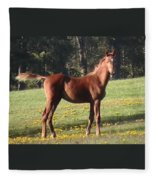 Blythewood Farms Horse Fleece Blanket
