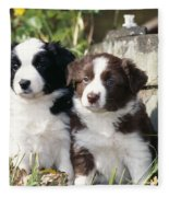 Border Collie Dog, Two Puppies Fleece Blanket