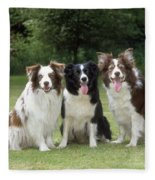 Border Collie Dogs Fleece Blanket