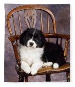 Border Collie Puppy On Chair Fleece Blanket