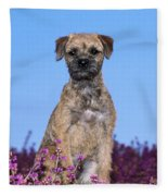 Border Terrier Dog, In Heather Fleece Blanket