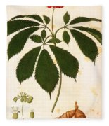 Botany: Ginseng Fleece Blanket