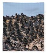 Brandts Cormorant Colony Fleece Blanket