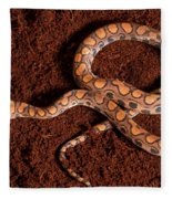 Brazilian Rainbow Boa Fleece Blanket