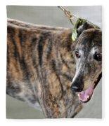 Brindle Greyhound Dog Usa Fleece Blanket