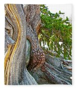 Bristlecone Pine On Ramparts Trail In Cedar Breaks National Monument-utah  Fleece Blanket