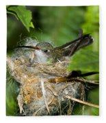 Broad-billed Hummingbird In Nest Fleece Blanket