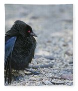 Bronzed Cowbird Display Fleece Blanket