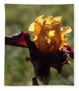 Brown And Yellow Iris Fleece Blanket