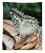 Brown Clipper Butterfly #3 Fleece Blanket