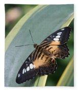 Brown Clipper Butterfly #4 Fleece Blanket