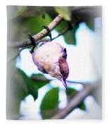 Brown-headed Nuthatch 9173-006 Fleece Blanket