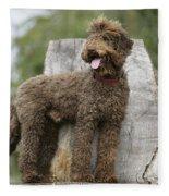 Brown Labradoodle Standing On Tree Stump Fleece Blanket