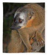 brown Maki Madagascar 2 Fleece Blanket