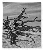 Bryce Canyon Tree Art Fleece Blanket