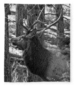 Bull Elk Bw Fleece Blanket