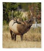 Bull Elk II Fleece Blanket