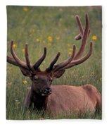 Bull Elk Resting Fleece Blanket