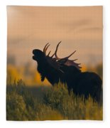 Bull Moose Grunting Fleece Blanket