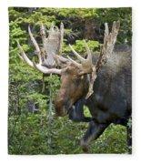 Bull Moose Shedding Velvet Fleece Blanket