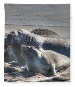 Bull Seal Fleece Blanket