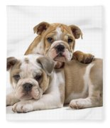Bulldog Puppies, One On Top Of The Other Fleece Blanket