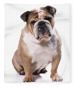 Bulldog Sitting Fleece Blanket