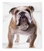 Bulldog Standing, Facing Camera Fleece Blanket
