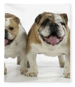 Bulldogs, Male And Female Fleece Blanket