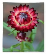 Burgundy Straw Flower Fleece Blanket