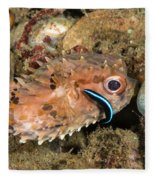 Burrfish And Cleaner Goby Fleece Blanket