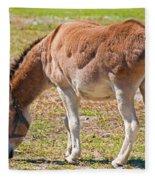 Burro Equus Asinus Fleece Blanket